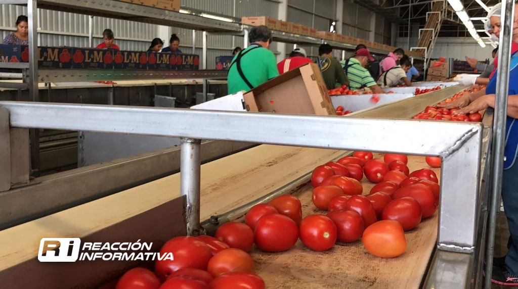 Defenderá Quirino a los productores de tomate en Washington